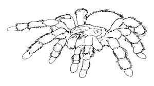 Spider Color Pages Avengers Coloring Pages Free Free Spider Coloring
