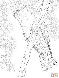 Colouring Pages For Kids Australian Animals With Rose Breasted