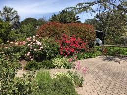 in early may we boarded a bus and toured the elizabeth f garden and house in palo alto we had a wonderful luncheon in the garden