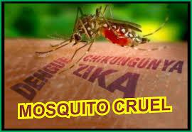 Resultado de imagem para zika dengue e chicungunha
