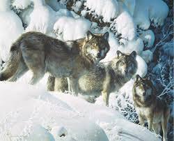 wolf painting by carl brenders