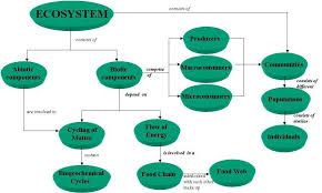 Components Of Ecosystem Flow Chart Create An Ecosystem Web By Drawing Arrows Between Components