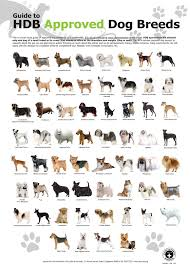 Dog Characteristics Chart List Of Dog Breeds Helpfully Made A Great Infographic On