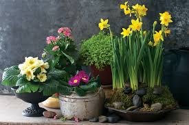 8 indoor container gardens to make spring bloom