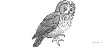 Контрольная работа по биологии Земноводные пресмыкающиеся птицы  hello html m2081ca12 png