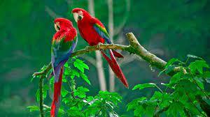 Parrots Wallpapers on WallpaperDog