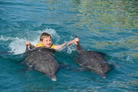 photo essay ocean world n republic turf to surf dolphin swim n republic ocean world