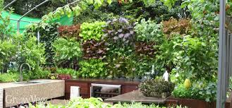 Wall Climbing Plants 3 Evergreen Wall Climbing Plants For Shade Wall Climbing Plants Nz