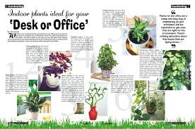 best low light office plants. Ergonomic Best Small Indoor Office Plants Easy To Grow Houseplants Awesome Great Low Light Identify Common