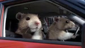 kia soul hamster.  Hamster Intended Kia Soul Hamster D