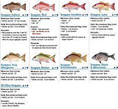 Fwc Saltwater Fishing Regulations Chart