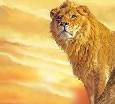 мужские эскизы татуировок львы