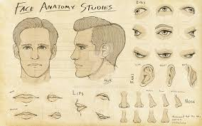face anatomy 3dsense face anatomy studies by ssgt lulz on deviantart