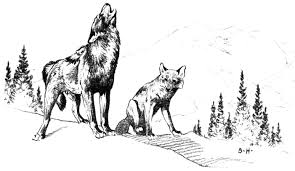 Small Picture Coyote Coloring Pages Coloring Page