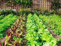 vegetable garden orientation