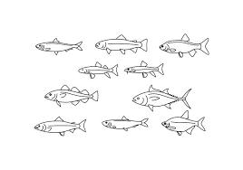 魚イラストレーター素材集ダウンロードイラスト用壁紙 素材 無料無料