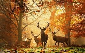 Znalezione obrazy dla zapytania jesień w lesie obrazki