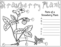 Small Picture of a flower coloring page