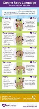 58 Best Dog Body Language Images Dog Body Language Dogs