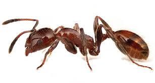 Resultado de imagen de ant