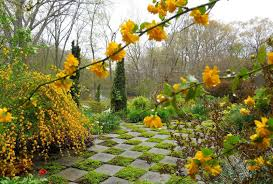 Small Picture Flowers Tree Beauty Nature Garden Flower Beautiful Yellow