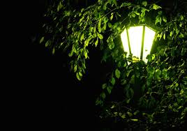 moonlight outdoor lighting. Outdoor Light In Tree Moonlight Lighting O