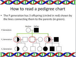 Genetics Pedigrees Powerpoint Slide Show