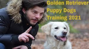 Golden Retriever (Puppy) Dogs 101 ...