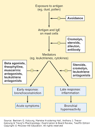 Asthma Pathophysiology Flow Chart Drugs Used In Asthma Chronic Obstructive Pulmonary Disease