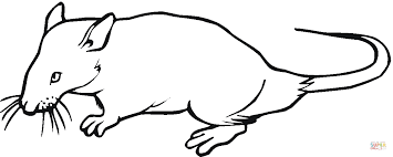 Small Picture Rat 14 coloring page Free Printable Coloring Pages