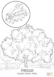 State Of Texas Symbols Coloring Pages State Symbols Coloring Pages