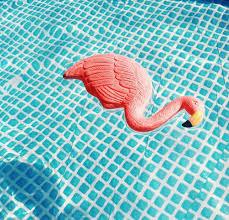 summer pool tumblr. Pool Vibes :: Flamingo Float Summer Friends Adventure Sun Poolside Fun Blue Water Paradise Bikinis See More Untamed Tumblr