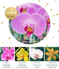 flower meanings orchid2