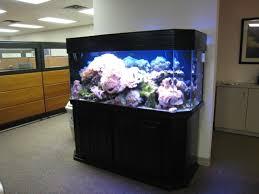 Office aquariums Commercial Business Tank In Office Space Amazoncom Business Tank In Office Space Aquatic Design Aquariums