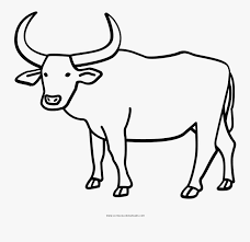 Easy cow drawing online video tutorial for. Ox Drawing Free Transparent Clipart Clipartkey