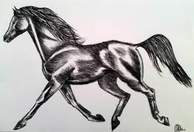 trotting horse drawing. Modren Trotting Horse Trotting  Drawing In Charcoal Throughout E