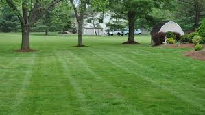 How To Fertilize Your Lawn Without Killing Grass Angies List