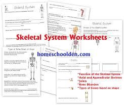 Skeletal System Worksheet Packet & 6 Hands-On Activities About ...