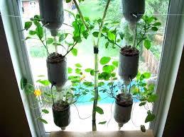 herb wall garden herb wall planter indoor garden ideas grower planting herbs in pots g indoor