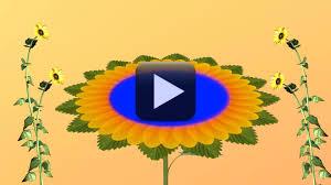 hd 1080p wedding flower animation background