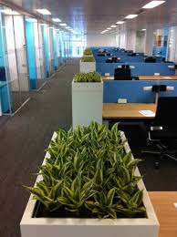office planter. Built In Cabinet Trough Planters Bring Greenery Through The Workfloor. Office Planter