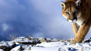 Animal Desktop Backgrounds (57+ best ...