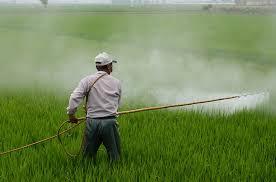 """Résultat de recherche d'images pour """"pesticides"""""""