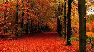 Fall Foliage Wallpaper For Desktop ...