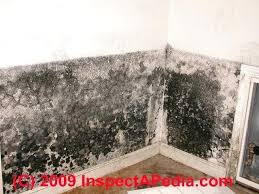 black mold on a building interior wall c what kills walls clean off naturally ozone for removing mould from walls