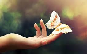 к чему снятся бабочки цветные большие чёрные белые жёлтые