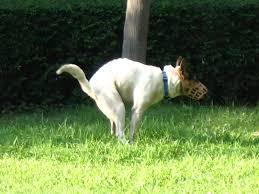 Image result for dog shit
