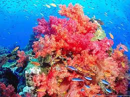 colorful coral reef wallpaper. High Resolution Colorful Nature Coral Reef Wallpapers HD 12 Full Desktop Background And Wallpaper