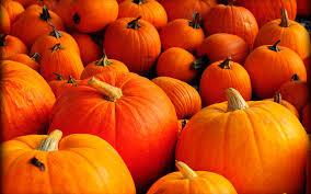 Pumpkin Wallpaper on HipWallpaper ...