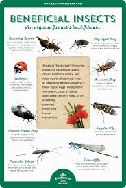 Beneficial Insects Chart Downloads Garden Pests Beneficial Insects Garden Insects